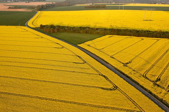 Vue aérienne champs de colza