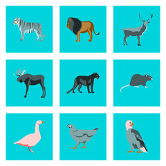 Set of  illustration in flat style animals