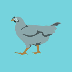 illustration in flat style hen