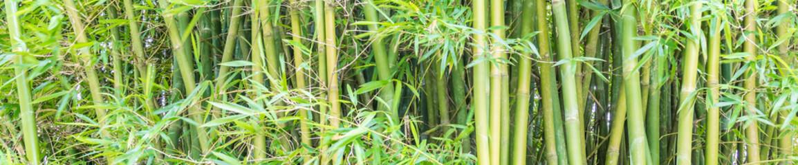 Zielone tło z bambusa.