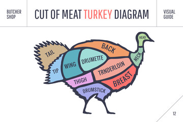 Cut of meat set. Poster Butcher diagram, scheme - Turkey. Colorful vintage typographic hand-drawn turkey silhouette for butcher shop, restaurant menu, graphic design, food theme. Vector Illustration