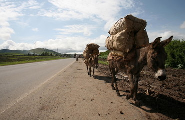 To match feature ETHIOPIA-DONKEYS/