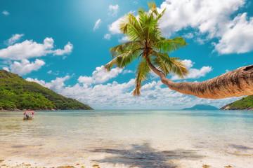 Fototapete - Palm tree on amazing tropical beach. Vintage processed.