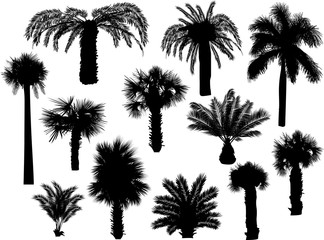 twelve palm silhouettes isolated on white