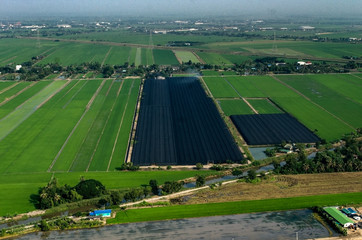 Farming, Agriculture Aerial Photography in Thailand