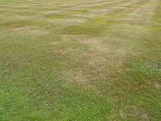 Dry Cut Grass
