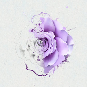 Beautiful purple rose, of two different halves. Aulnay half of the sketch, the second, with elements of drips and splashes of paint as conceptual art. Suitable as print for clothes, bag or office.