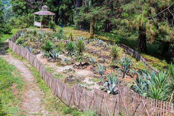 Cactus plantation in garden
