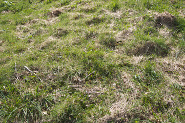 Rough patchy grass