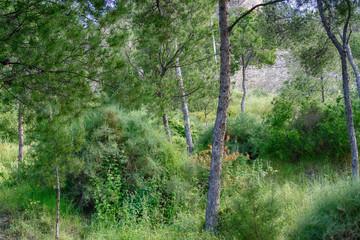Wood - Spain