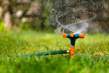 Garden sprinkler watering grass