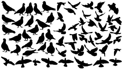 Silhouette of flying birds, collection