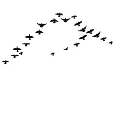 Silhouette of flying birds, flight,  illustration