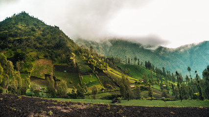 Mountains and rice fields in Java, Indonesia