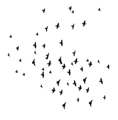 Silhouette of flying birds, flight, flock, many