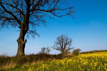 landscape in spring in germany