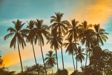 Coconut palm trees silhouetted against tropical twilight sky