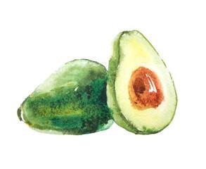 Avocado fruit, watercolor illustration