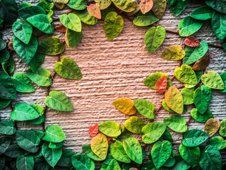 wall and ivy plant Background