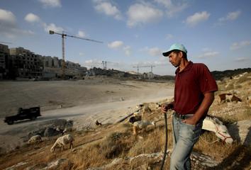 A Palestinian shepherd walks in front of a Jewish settlement near Jerusalem