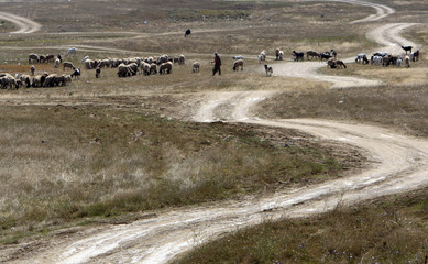 A Bulgarian farmer herds sheep and goats near the village of Lesnovo