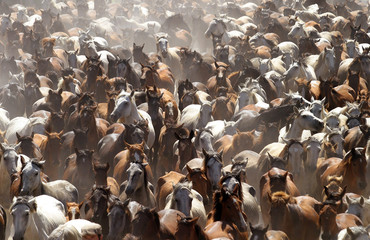 """Mares make their way through Almonte village during traditional """"La Saca"""" parade in southern Spain."""