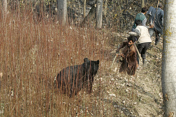 An Asiatic black bear is confronted by local villagers hunting it, near village of Gasoo on outskirts of Srinagar
