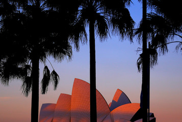 Palm trees can be seen in front of the Sydney Opera House at sunset in Sydney