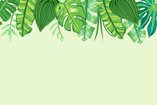 Green Tropical Background with leaves in the top side. Vector illustration.