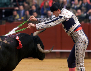 Spanish assistant bullfighter Emilio Rivero drives the banderillas into the bull during a bullfight ..