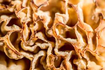 morel mushroom in the spring forest -  outdoor activity and spring season