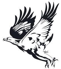 Aigles en noir et blanc prenant son envol