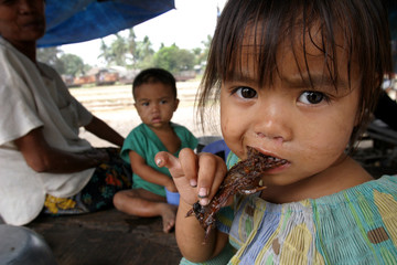 A YOUNG GIRL EATS A PIECE OF ROASTED RAT IN BATTAMBANG, NORTHWEST OF PHNOM PENH.