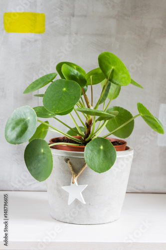 pilea peperomioides money plant home interior stockfotos und lizenzfreie bilder auf. Black Bedroom Furniture Sets. Home Design Ideas
