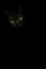 Cute black cat with green eyes is looking out of the shadow on the black background. Black cat pussycat. Green eyes black cat. Art shadow kitty. Cat in black. Cute kitten. Incredible dark shadow cat