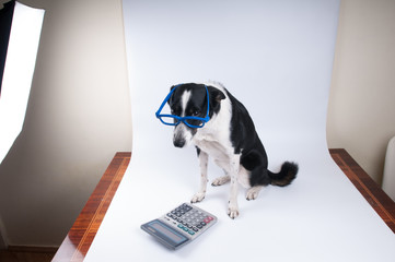 Studio shot of dog posing on white background