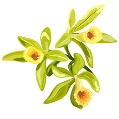 Vanilla flowers card