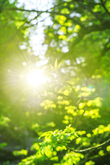 Sunny spring day Nature landscape sun rays