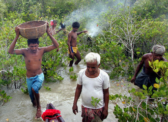 Traditional honey collectors show their skill as they collect honey at Bali Island in the Sunderbans ...