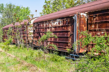 Old refrigerated railway wagon thrown by vegetation.