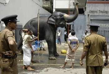 Police officers watch as a rampaging elephant is chained to a wall near a temple during a Hindu festival in Colombo