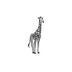 Giraffe tattoo design