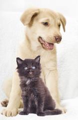 Wall Mural - cute puppy And a kitten