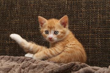 Cat / Little kittens