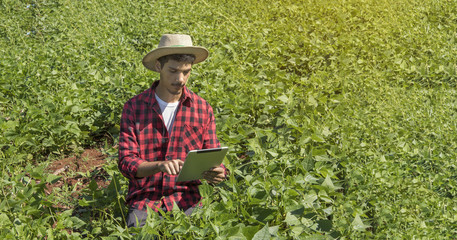 Farmer using digital tablet computer in cultivated bean field plantation. Modern technology application in agricultural growing activity. Concept Image.