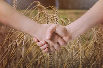 Farmers handshake over the wheat crop.
