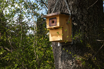 Wooden nest box on a tree, self-made bird shelter, environmental protection in the garden and park for an intact nature