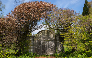 Old wooden garden gate in a book hedge, romantic garden design, in spring on a sunny day with blue sky
