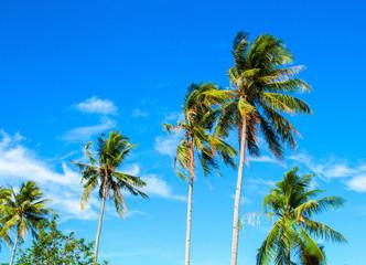 High palm tree on tropical island. Bright blue sky background.