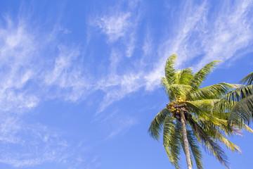 Single palm tree on tropical island. Bright blue sky background.
